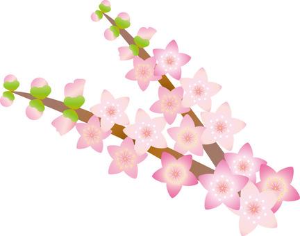Branch peach blossoms