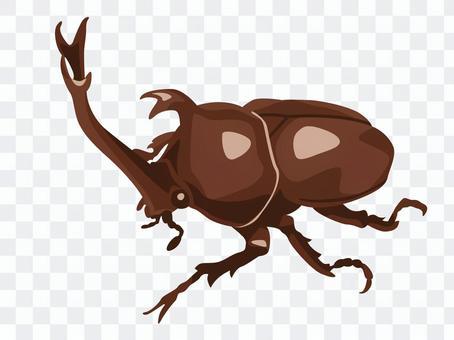 Animal_insect_beetle_無線