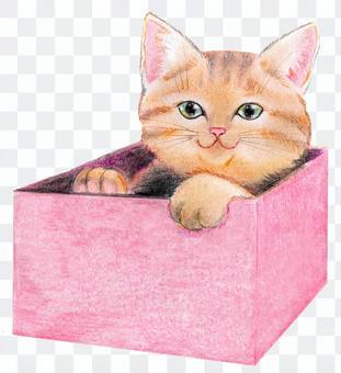 坐在盒子裡的貓
