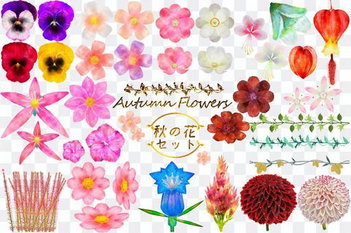 秋の花の水彩風イラストセット