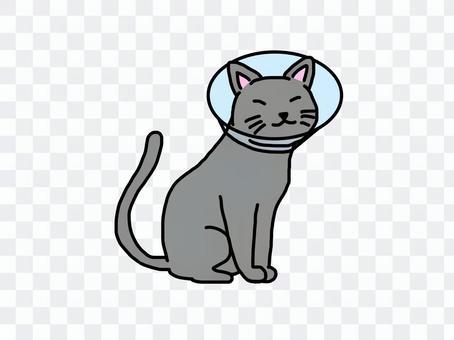灰猫 エリザベスカラー