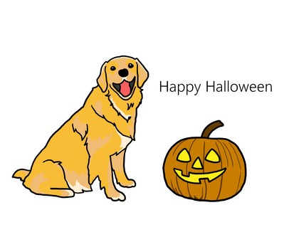 Halloween golden retriever