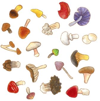 手繪_赤壁蘑菇紡織品