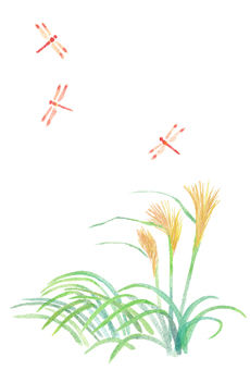 계절의 엽서 [가을 억새와 잠자리]