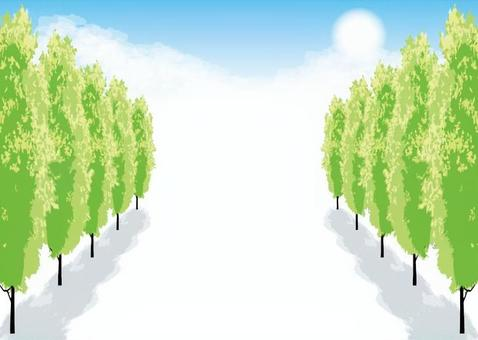 Row of poplar trees Street trees Card Spring and summer Landscape 2