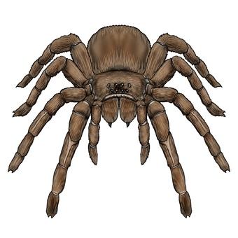 Tarantula, or giant spider monster