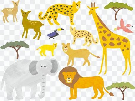 Safari savannah animals