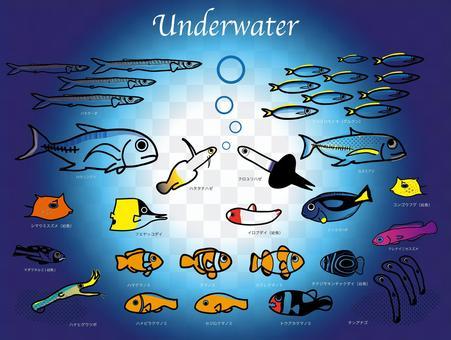 南の海の魚たち-2 水中