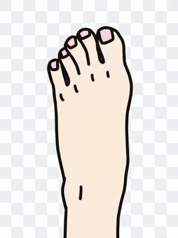 腳腳腳趾腳背