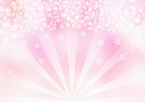 櫻桃樹_輻形_粉紅色的背景