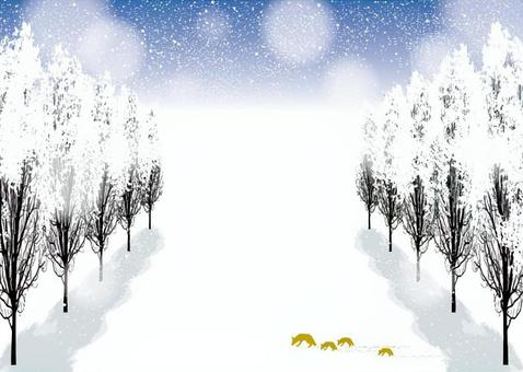 Poplar row of trees street tree winter landscape 2