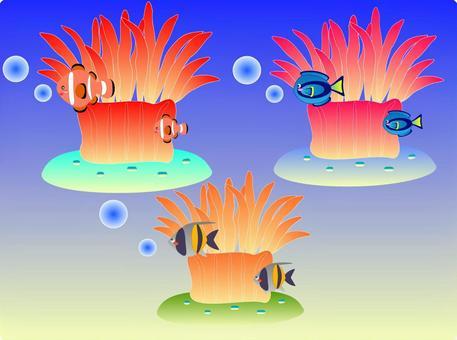 Sea anemone &