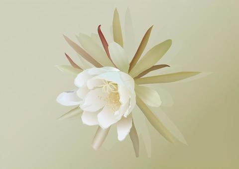 Flower material (Tsukina Mika)