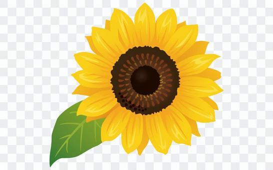 夏天花·向日葵(向日葵)圖標01