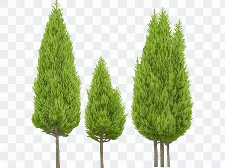各種樹木(5)