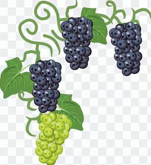 葡萄巨峰裝飾莖部零件標題