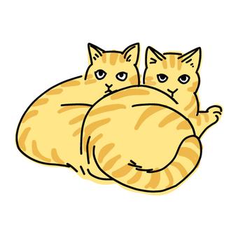 茶老虎的兩隻貓粘在一起,curl縮