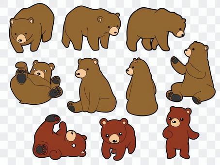 10 species of bear