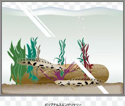 p藜end魚水族館魚缸