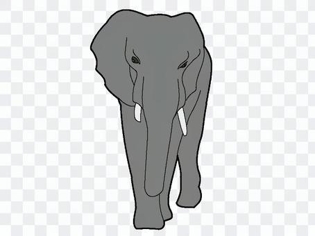 大象(灰色)