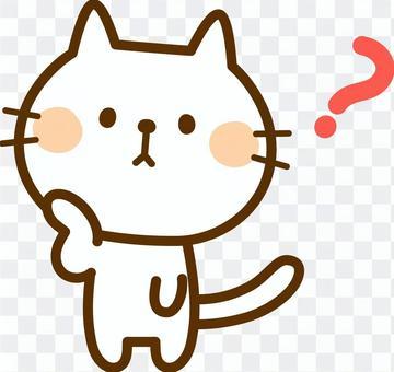 想知道白色的貓