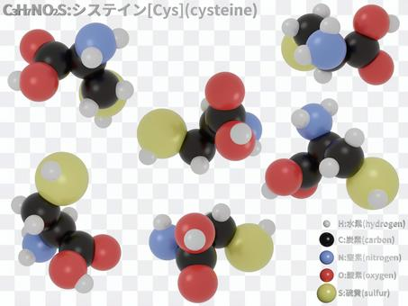 半胱氨酸(氨基酸)的分子模型