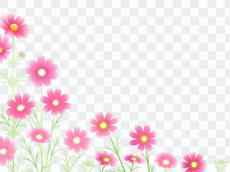 秋向け・コスモスのフレーム8ピンク