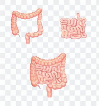 大腸和小腸
