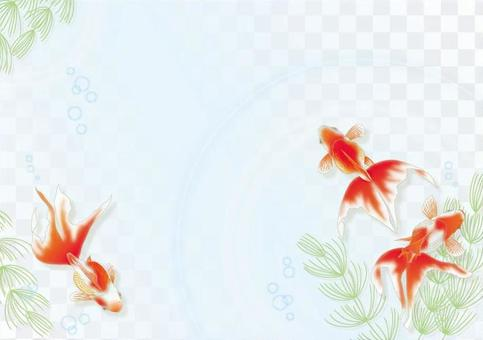 水平的金魚和水草