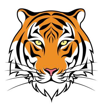 Tiger tiger face white background