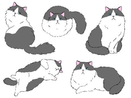 長毛貓(灰白色)