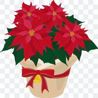Poinsettia wrapping