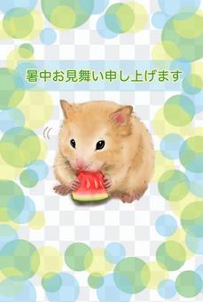 夏季問候明信片(倉鼠,西瓜)