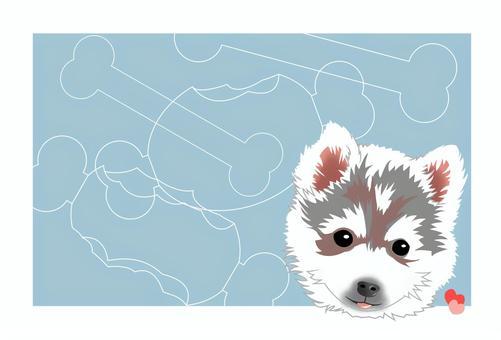 西伯利亞雪橇犬藍心