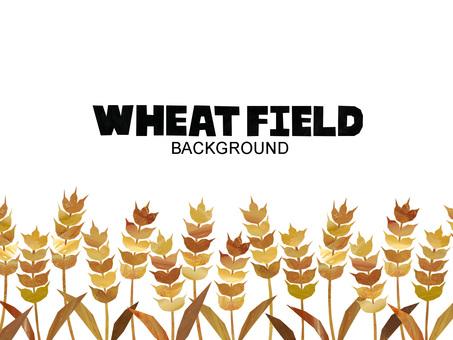 小麥背景/框架