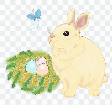 復活節兔子(兔子,含羞草,雞蛋)