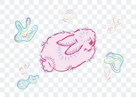 兔子在夢中徘徊5