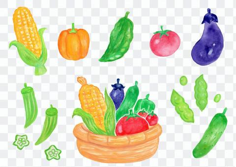 水彩夏天蔬菜集