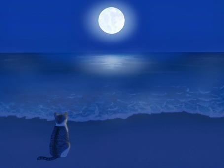 抬頭看著沙灘上的滿月的貓