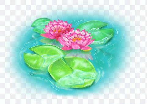 靜靜地漂浮的花例證荷花