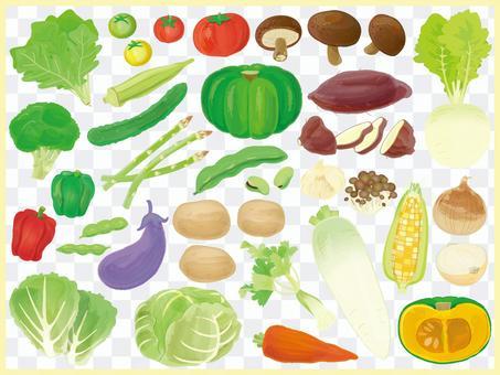 蔬菜圖(無橫幅)