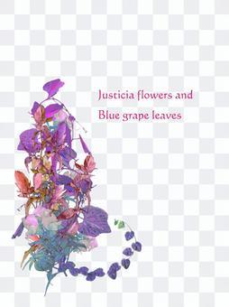 夏色の花イメージ