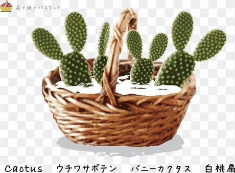 花綠色花籃仙人掌C
