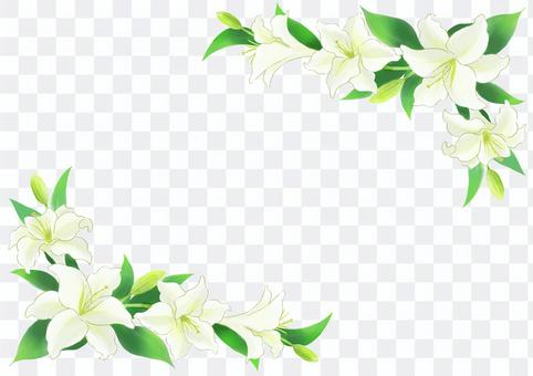 Lily frame