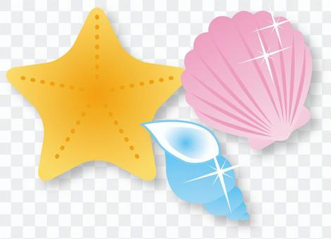 Seashell / Type f / uta