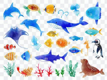 海の生き物セット