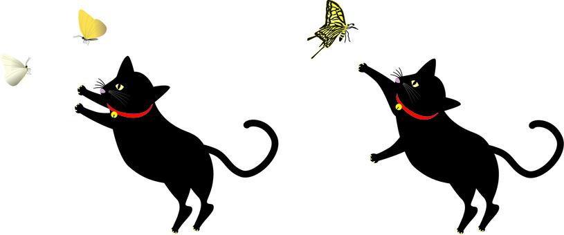 Butterflies butterflies cats black cats catch play