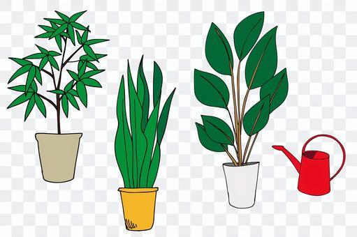 手繪插圖的觀葉植物