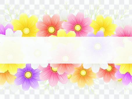秋向け・コスモス背景・白帯付2