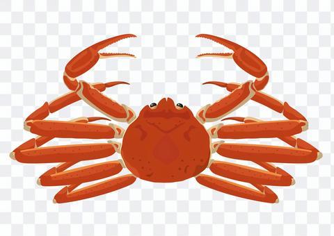 Crab snow crab